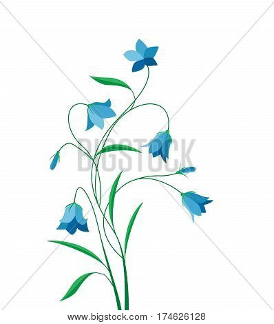 Vector illustration blue bell-shaped bloom, summer flower Campanula