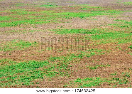 Top view of the ground surface with green vegetation areas