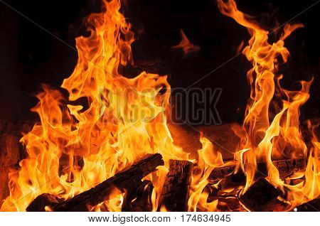 Wood fire on black background. Blazing camp fire