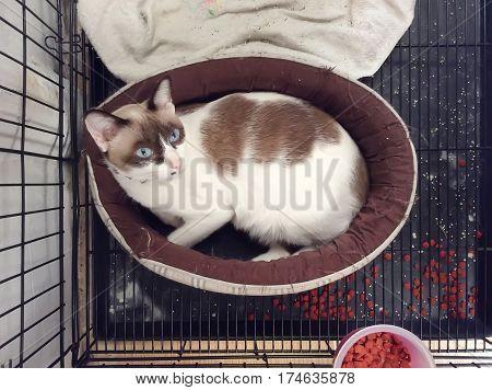 Cat Sleeping On A Mattress