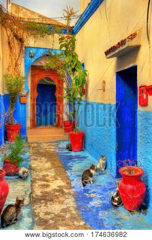 Cats on a street of the Kasbah of the Udayas in Rabat, Morocco