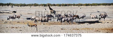 Animals in Etosha National Park, Namibia, Africa