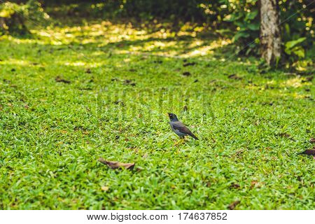 The Bird With Yellow Legs And A Yellow Beak On A Green Lawn