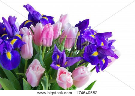 Bunch of blue irises and pik tulips isolated on white background