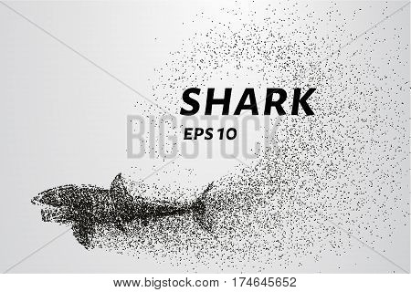 The Shark From The Particle. The Shark Consists Of Circles And Points. Vector Illustration