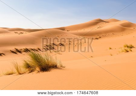 View over sand dunes in the Sahara desert Ouzina with some grass in the foreground, Morocco.