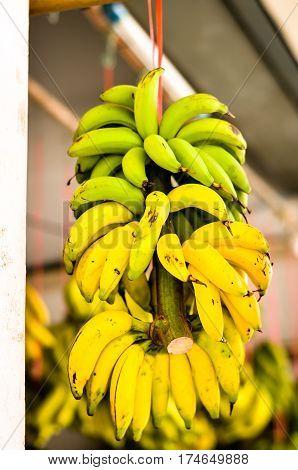 bundle of bananas hanging at asian streetfood market