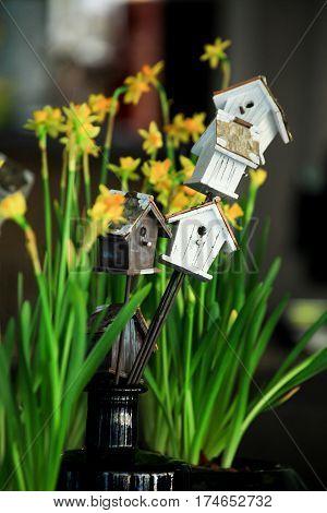 Spring, composition, daffodil, flower, birdhouse, house, cosiness, decor