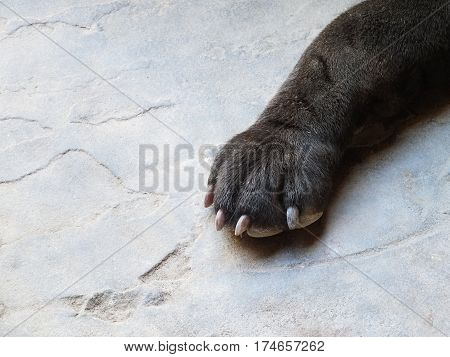 Dog paw. Dog paw on a concrete background