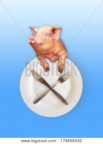 funny pig looks out over the plate with a knife and fork as a symbol of gluttony