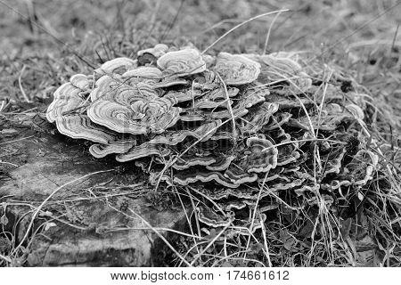 Beautifully patterned floor sponge - black and white shot