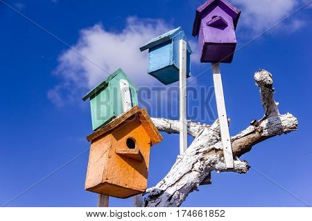 Varicolored colorful wooden nesting boxes birdhouses on the blue sky bird's hostel. A lot of bird houses on one tree.