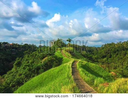 Sunny paradise landscape with rice field and wild forest. Blue and green natural photo background or banner. Romantic place in Bali island. Summer vacation in Indonesia. Touristic destination of Asia