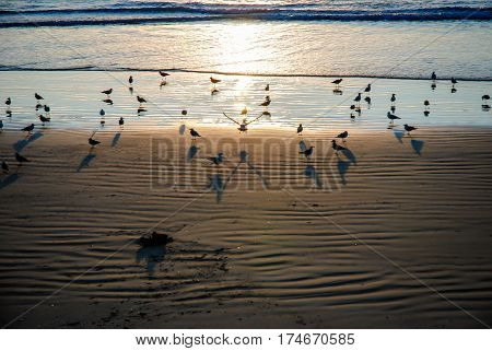 lerici beach in la spezia italy crowded with seagulls at sunset