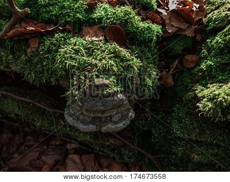 Polypore and moss in nature.Spring day with nature