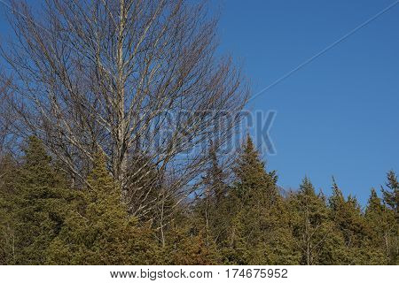 Branching Trees. Detailed And Naked Trees Branches