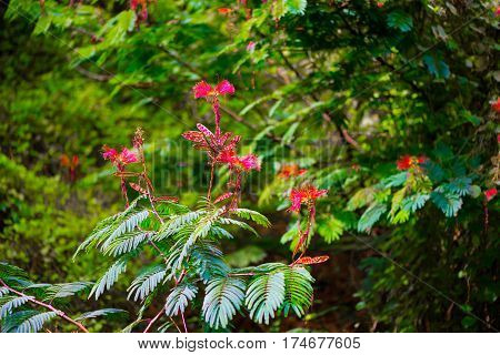 Bright red flowers stand out in a green tropical garden
