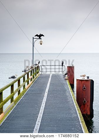 Empty Pier In Harbor. Steel Grate Board. Black Cormorant Sit On Lamp.