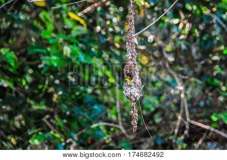 Tiny Yellow Bird In Daintree Rainforest, Australia