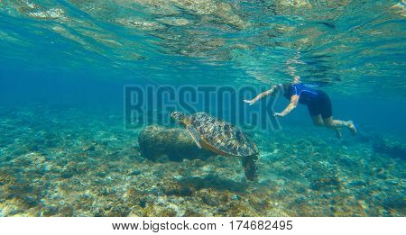 Woman swimming with sea turtle. Exotic sea animal. Tropical island vacation sport activity. Woman snorkeling with green turtle underwater photo. Sea turtle with swim woman in mask and snorkeling gear