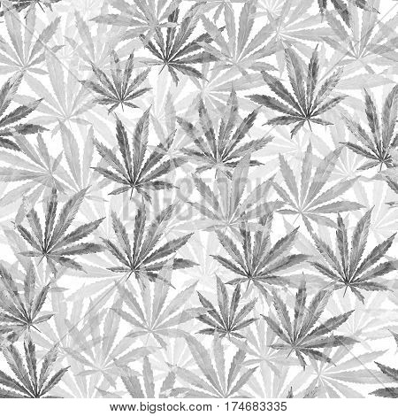 Gray Cannabis leaves on white background. Hand drawn watercolor illustration of the plant Cannabis Sativa or Marijuana. Pattern with marijuana leaf for label poster web.