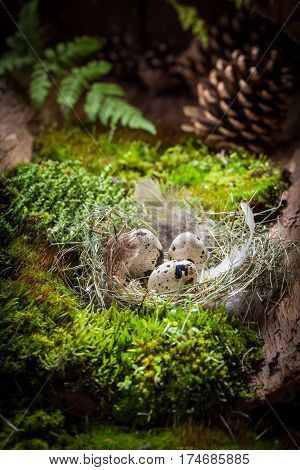 Fresh Eggs For Easter In The Nest With Feathers
