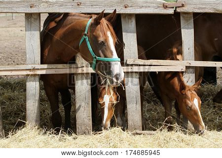 Closeup photo of mares and foals on the ranch
