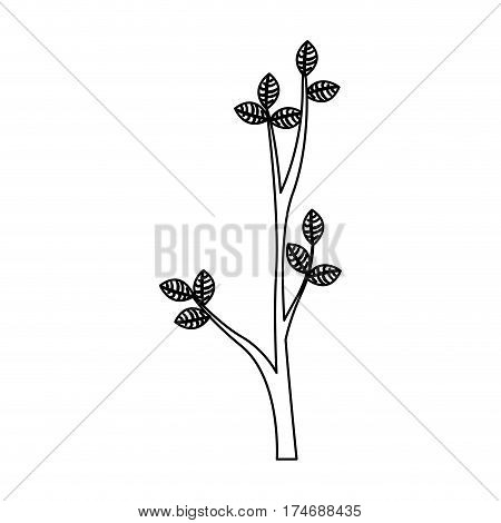 silhouette ramification with leaves nature design vector illustration
