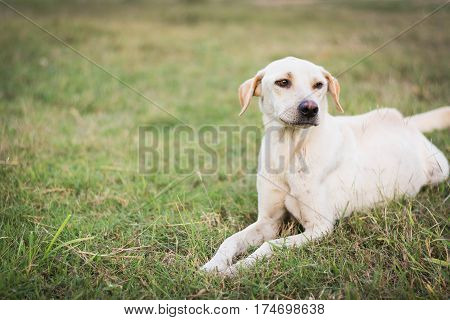 pitiable wounded dog sitting on green grass
