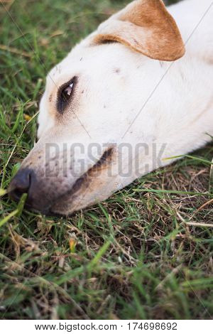 wounded dog sleeping on dry green grass