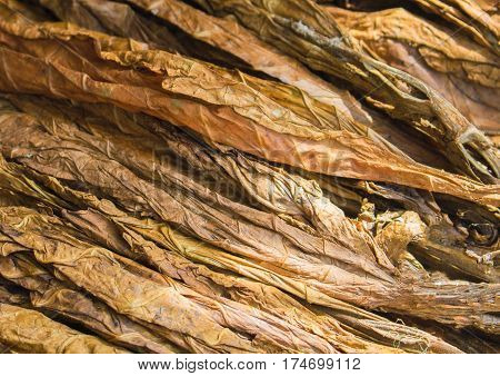 Golden tobacco leaves. Golden leaf background. Raw tobacco leaf under sun. Cigarette ingredient or raw material. Tobacco leaf pile. Bunch of raw tobacco leaves. Natural smoking plant leaf mound photo