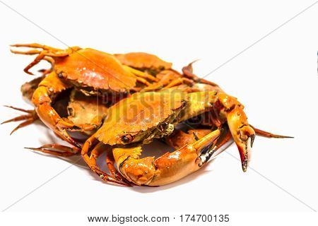 Cooked sea crab meat on white background. Red crab studio photo for restaurant menu or cooking recipe book. Fresh seafood for dinner. Healthy eating. Whole red boiled crabs. Seafood cuisine closeup