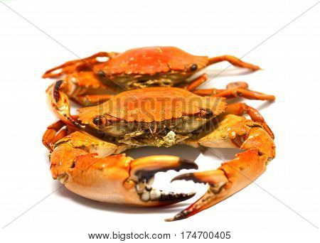 Red crabs on white background. Cooked sea crab meat on white background. Red crab studio photo for restaurant menu. Fresh seafood for dinner. Healthy eating. Whole red boiled crabs.