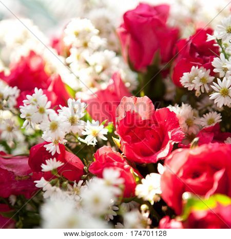 Close up of red roses bouquet flowers background