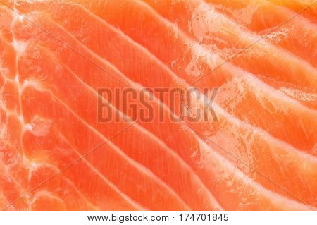 salmon red fish close up texture fresh