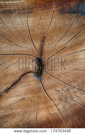brown wood stump background. A close up