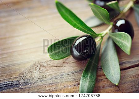 Olive over Wood Background. Olive branch on old olive tree close up. Fresh and Healthy organic olive fruits border design with copy space for your text