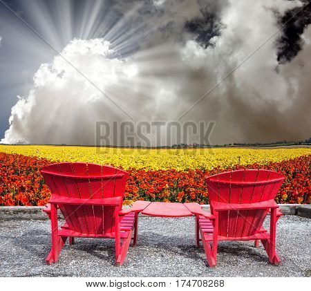 The concept of recreation and eco-tourism. The hot spring sun. Two joined red plastic chairs next to fields of garden buttercups