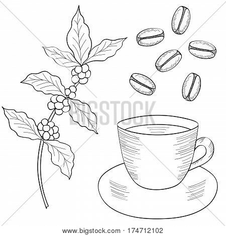 Coffee plant branch with leaf berry bean cup. Food and drink organic boutique. Natural organic caffeine. Green coffee luwak. Hand drawn sketch illustration.