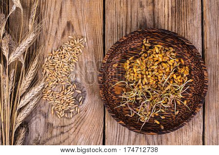 Wholesome food-grains germinated on Plate. Studio Photo