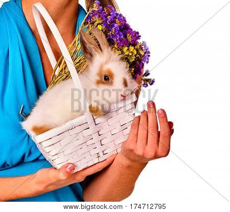 Easter egg bunny on woman hands. girl holding animal in in basket . Cropped shot of female in blue with flowers. Adults at festival. White background isolated.