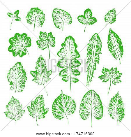 Set of vector Leaf imprints. Collection of green leaves imprints on white background. Herbarium illustration. Botanical illustration. Grunge leaves. Leaf stamp