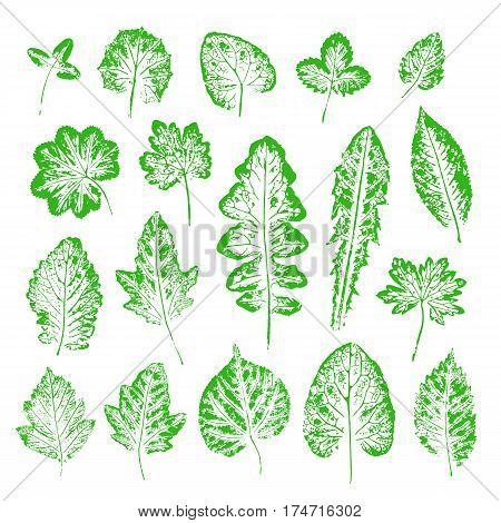 Set of vector Leaf imprints. Collection of green leaves imprints on white background. Herbarium illustration. Botanical illustration. Grunge leaves. Leaf stamp