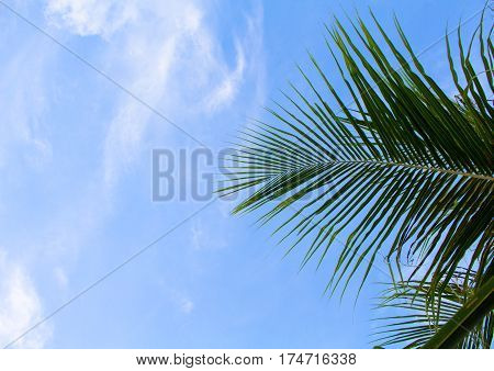 Coconut palm leaf on sky background. Summer vacation banner template with place for text. Tropical nature minimal photo. Coco palm tree branch on blue sky. Palm tree leaf under sun. Paradise skyscape