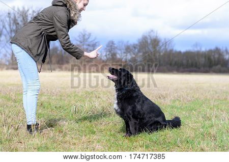 Young Woman Teaching Her Dog To Sit And Stay