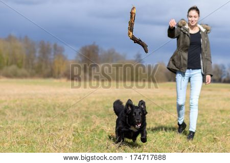 Young Woman Throwing A Stick For Her Dog To Chase