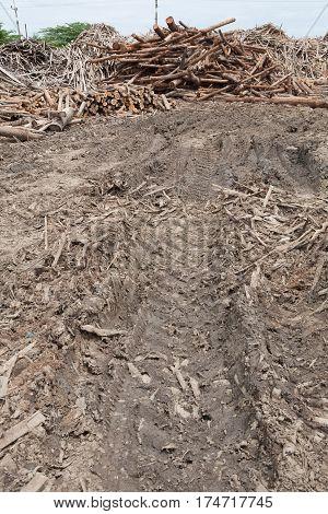 deforestation teak wood of way timber background