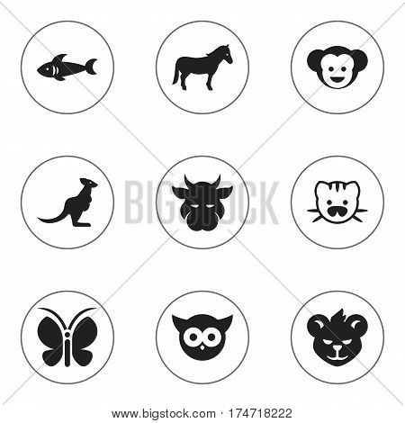 Set Of 9 Editable Animal Icons. Includes Symbols Such As Baboon, Night Fowl, Wallaby And More. Can Be Used For Web, Mobile, UI And Infographic Design.