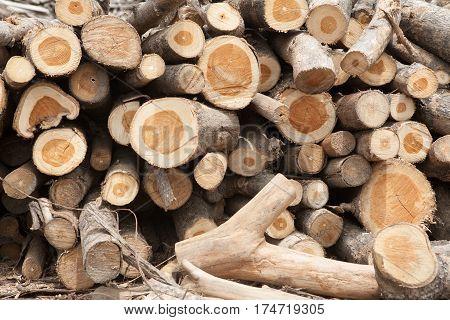 Stacked teak tree wood logs timber background