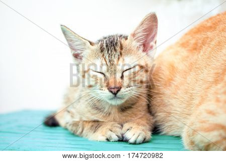 Sleeping kitten on wooden bench. Young cat on wooden background. Countryside life of domestic cat. Small kitten on rustic board. Lovely brown kitty. Domestic pet living outdoor. Lovely animal on white